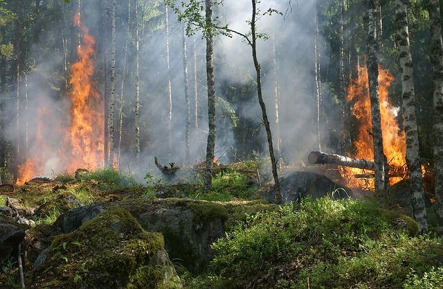 Пожароопасен сезон в горите. Как да опазим горите от пожари?