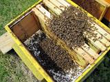 Смърт сред пчелите