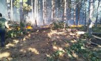 60 горски служители от ЮИДП-Сливен се включиха в борбата с големия пожар  край Свиленград